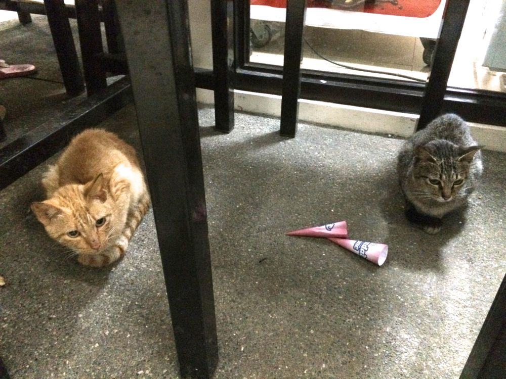 いつも行くセブンイレブンには猫が居る