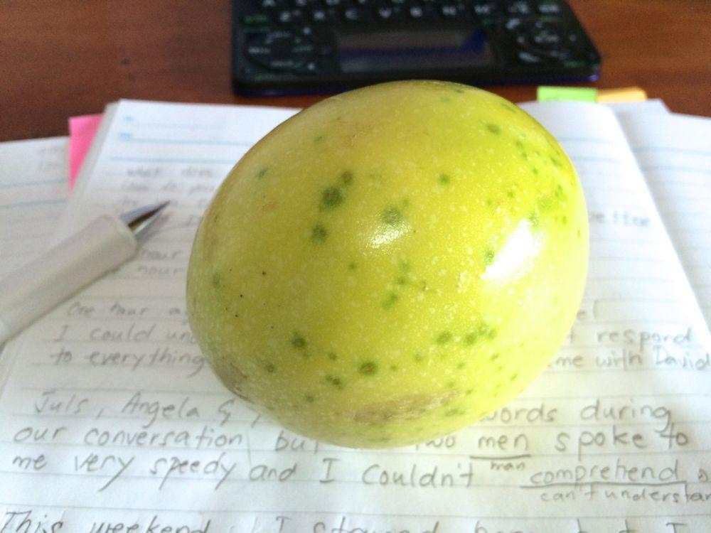 授業中にボブが持ってきてくれたパッションフルーツ