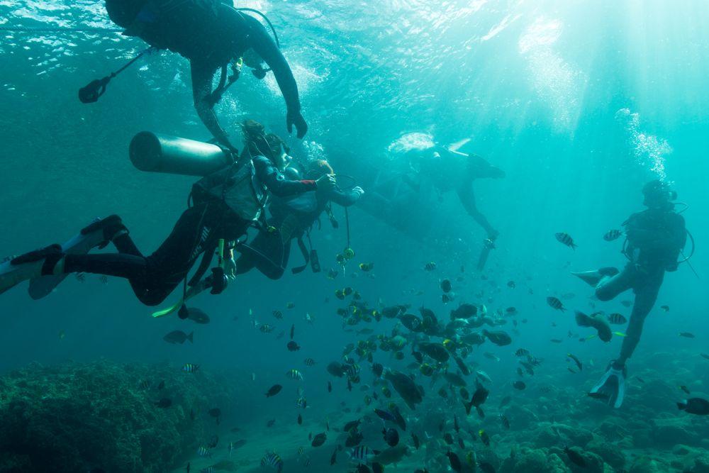 魚がいっぱいで海底は夢の世界です