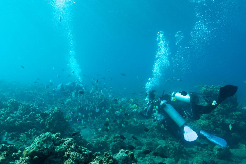 海底は夢の世界です